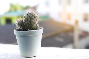 cactus in een pot bij een raam foto
