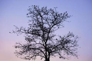 silhouet van een boom bij zonsondergang foto