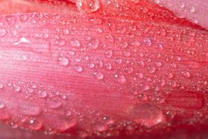 waterdruppels op een bloem foto