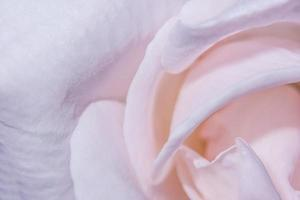 roze rozenblaadjes foto