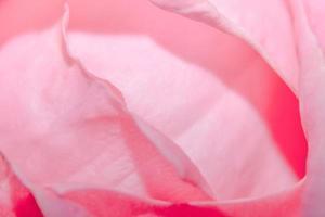 roze rozenblaadjes