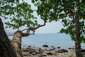 rotsen en bomen op een strand in thailand