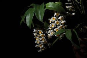 witte bloem op zwarte achtergrond