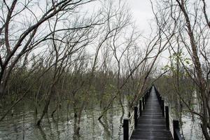 loopbrug in het mangrovebos foto