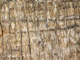 houtstructuur buiten foto