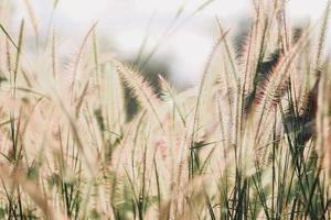 veld met wilde bloemen in de natuur foto