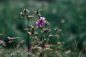 bloemen in de natuur groene achtergrond wazig foto