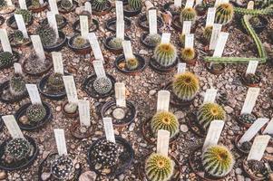botanische tuin bloem cactus foto