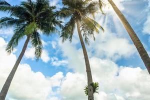 kokospalmen op Koh Chang
