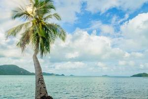kokospalm op Koh Chang