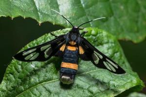 vlinder op een blad