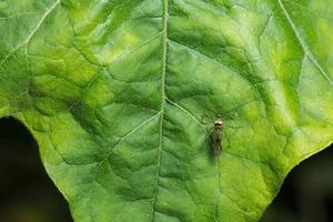 insect op een blad foto