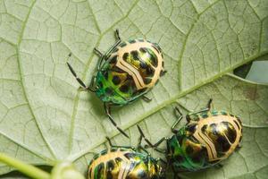 lieveheersbeestjes op een blad foto