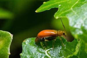 lieveheersbeestje op een blad foto