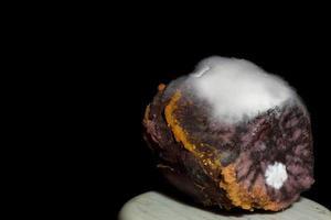 witte schimmel op gekookt fruit foto