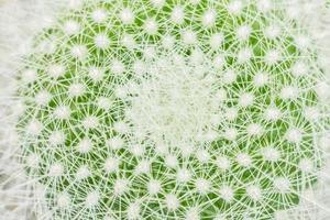 groene cactus close-up foto