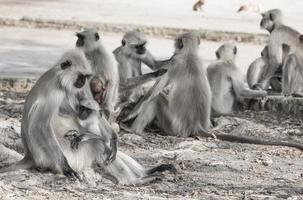 groep apen foto