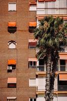 Torrevieja, Spanje, 2020 - Groene boom voor bruin betonnen gebouw foto