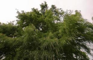perspectief van naaldboomgebladerte in de herfst