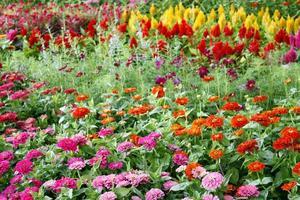 bed van bloemen