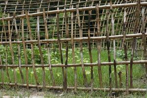 tuin voorzien van een bamboe schutting foto