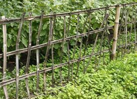 oude bamboe hek stroppen met groene planten foto
