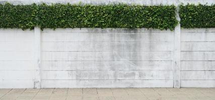 cementmuur en groen blad voor achtergrond foto