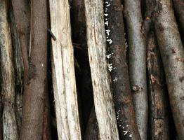 close-up aard textuur van eucalyptushout foto