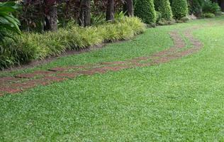 loop weg in groen park foto