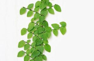groene bladeren op oude bakstenen muur foto