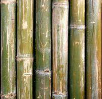 close-up van droge bamboe foto