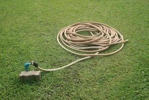 slang op gras foto
