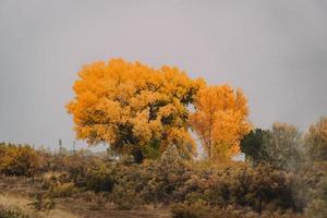 gele en groene bomen onder witte hemel overdag