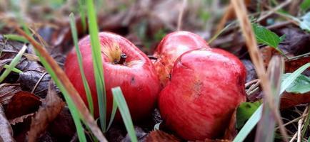 appels in gras foto