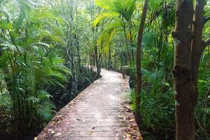 houten loopbrug in bos