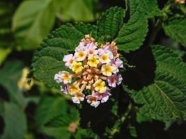 kleine bloemen buiten foto