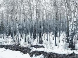 kale bomen in de winter foto