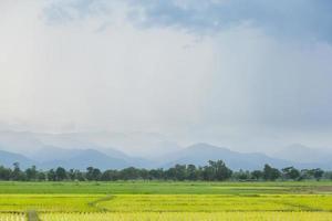 rijstboerderij in thailand