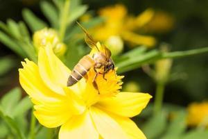 bij op zoek naar nectar op een bloem