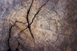 close-up van boomstronk voor textuur en achtergrond