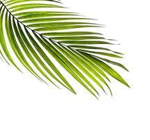 kokospalm blad met kopie ruimte foto