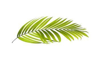 groen palmblad op witte achtergrond foto