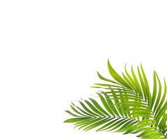 twee tropische bladeren