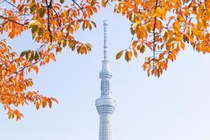 tokyo sky tree, tokyo, japan - 14 november 2016 foto