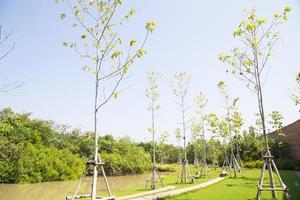 jonge bomen in het park