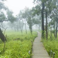 houten loopbrug in Thailand