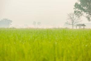 huisje midden in het rijstveld foto