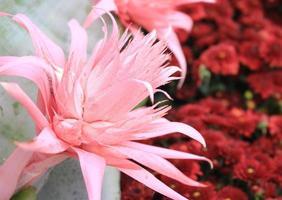 tropische roze bloem