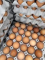 eieren in krat foto