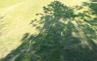 boomschaduw op gras
